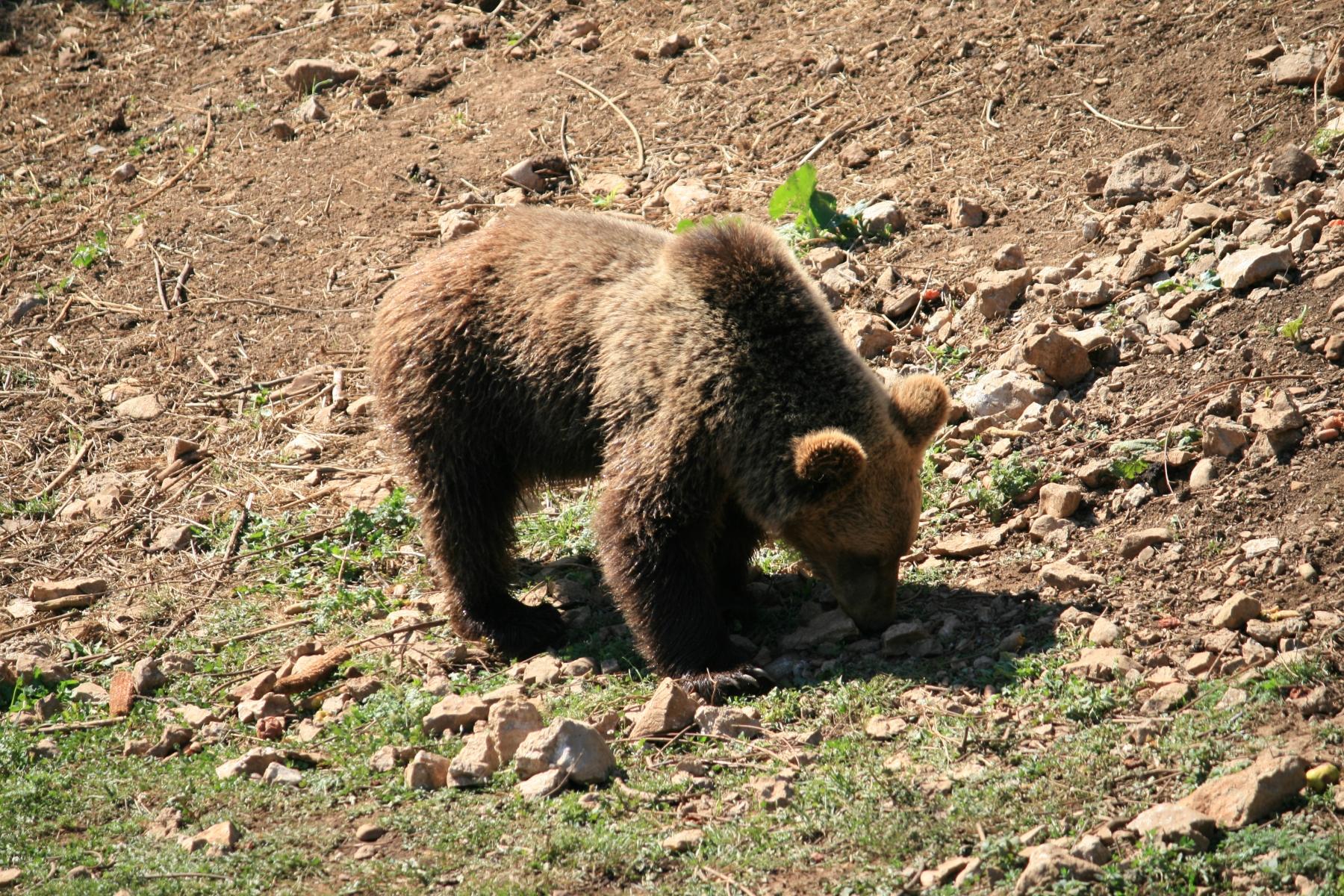 8-Bären-5