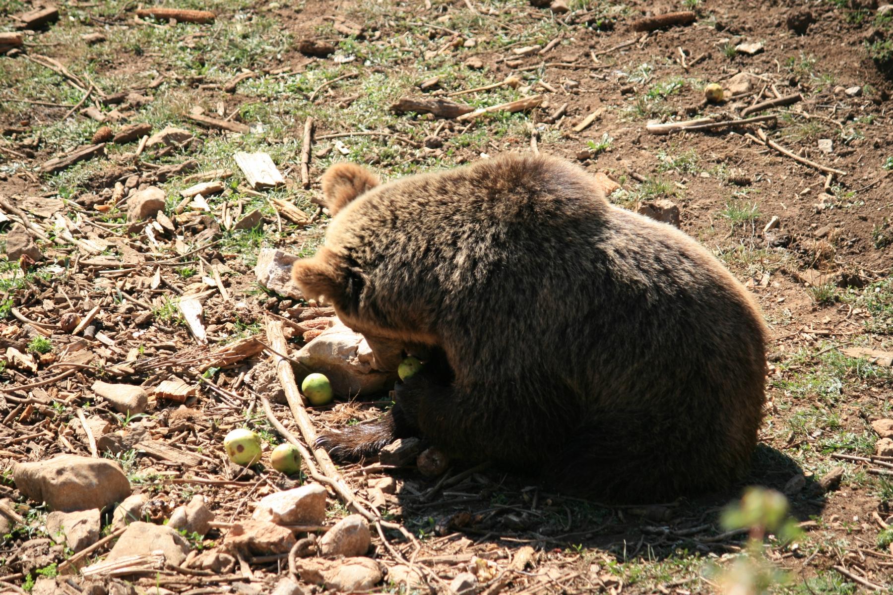 8-Bären-6