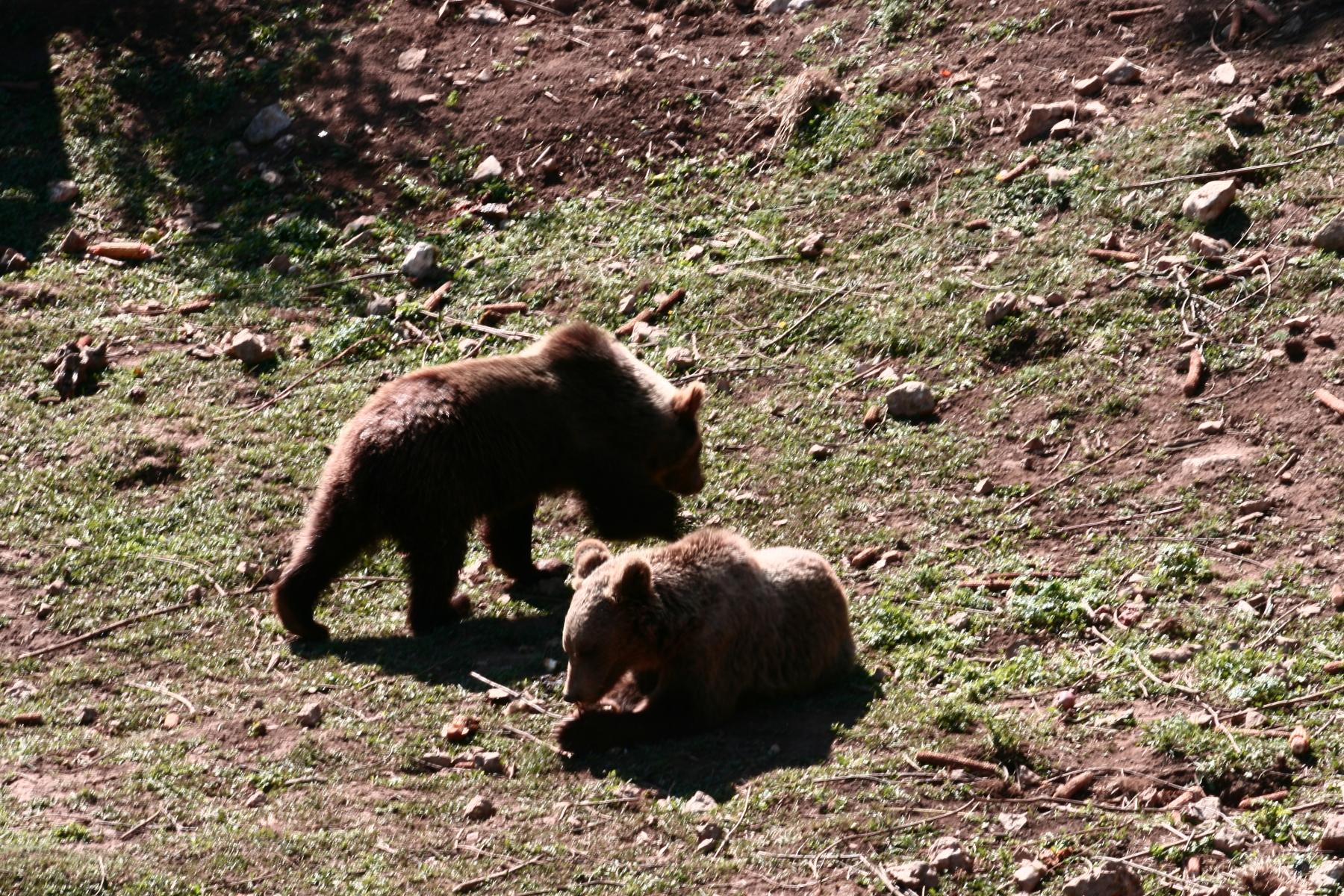 8-Bären-7